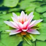 Mindful Mondays: Chakra Meditation