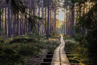 3 mindful activities to do in nature