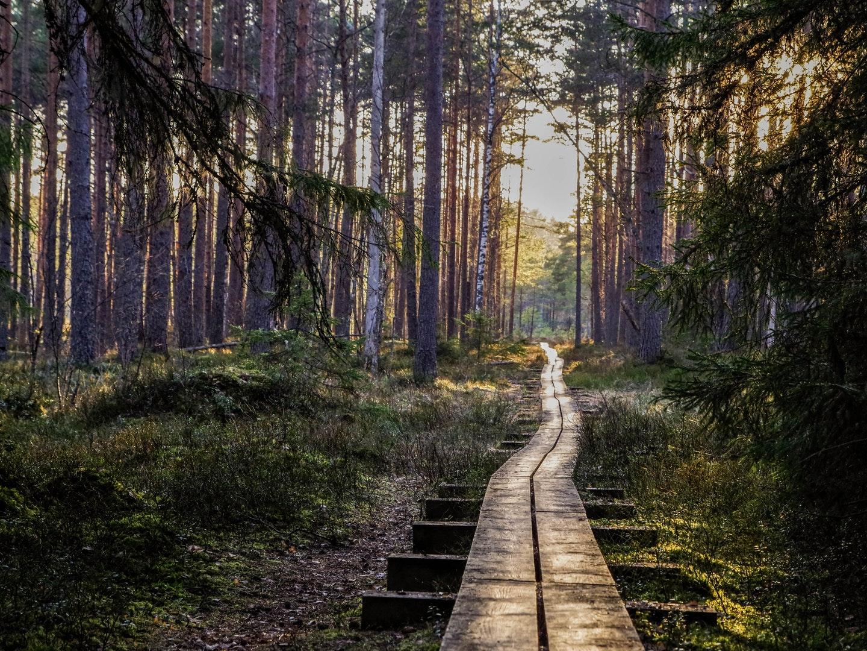 mindful-activities-nature